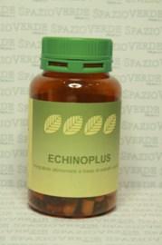 Echinoplus